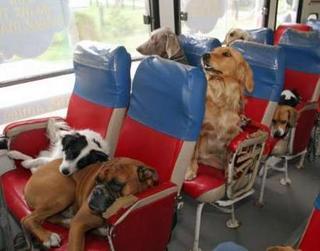 http://twofriedeggs.blogspot.com/uploaded_images/DogBus-710263.jpg